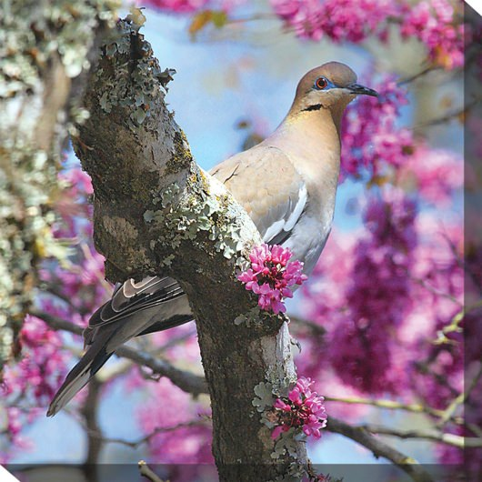 Dove In Redbud Outdoor Wall Art Piece