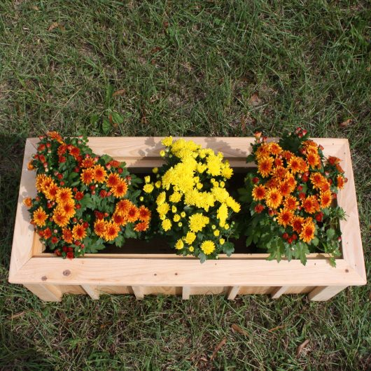 Cypress Rectangular Planter