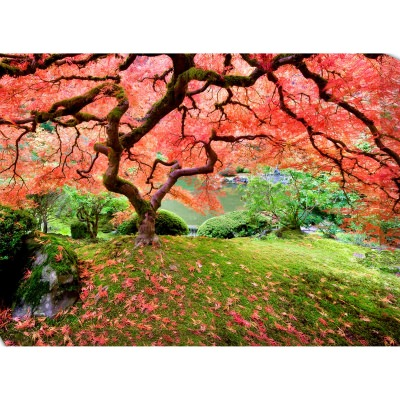 Japanese Maple Tree 2 Outdoor Wall Art Piece