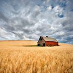 Barn In Wheat Field Outdoor Wall Art Piece