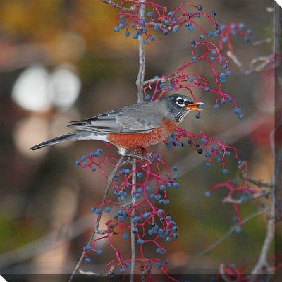 Robin In Autumn Outdoor Wall Art Piece