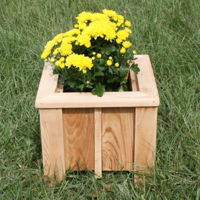 Small Cypress Planter